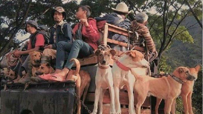 Porbbi se Indonesia Akan Berburu Babi di Sumbar, Meriahkan Buru Alek Anak Nagari Lagan di Pessel