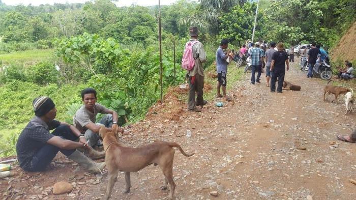 Ribuan Babi Mati di Sipora Mentawai, Diduga Akibat Wabah Virus Demam Babi Afrika