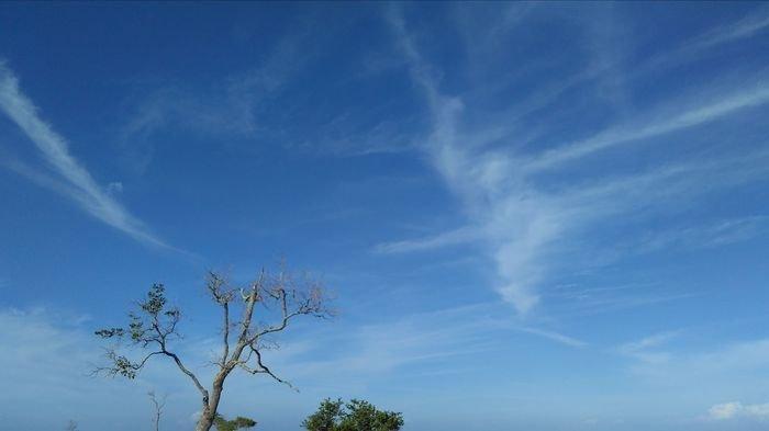 Terancam Gagal Panen Akibat Kekeringan, Petani di Bungus Teluk Kabung Siram Sawah secara Manual
