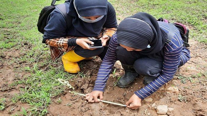 3 Kerbau Milik Warga Matur Agam, Diduga Diterkam Harimau Sumatera: 1 Mati dan 2 Luka-luka