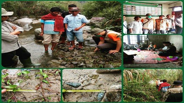 Warga Nagari Koto Nopan Pasaman Kaget Saat Lakukan MCK, Dapati Jejak Kaki Harimau Sumatera