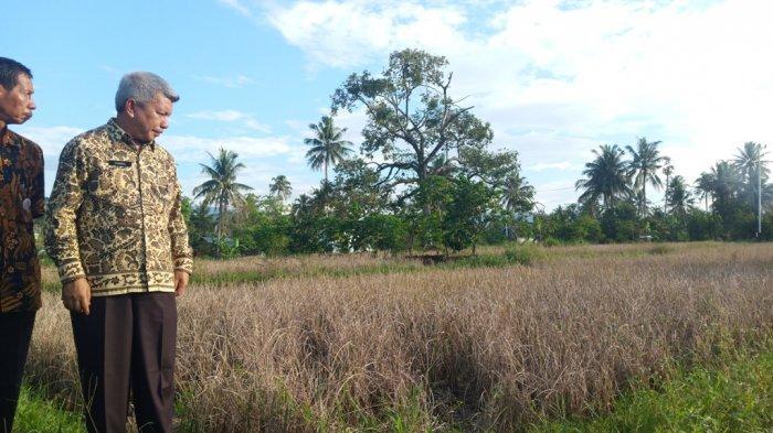Kekeringan Melanda 8 Kelurahan di Padang, Kadis Pertanian Sarankan Petani Tanam Palawija