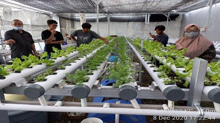 Dosen Fakultas Pertanian Unand Pengabdian Kepada Masyarakat, Bina dan Dampingi Usaha Hidroponik