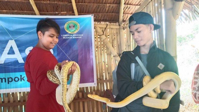 Komunitas Reptil dan Amphibi (Krap) Padang Dapat Membantu Menangkap Ular yang Masuk ke Rumah Warga