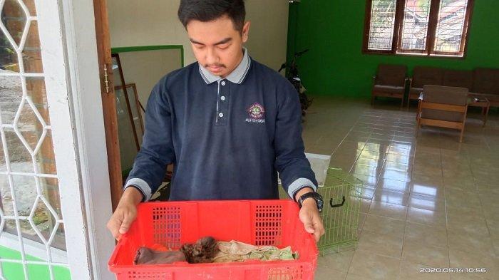 Warga Agam Temukan Dua Anak Kucing Hutan, Ditinggal Pergi Induk dan Berumur Sekitar 1 Minggu