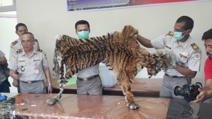 BERITA POPULER SUMBAR - Petugas Avsec BIM Amankan Kulit Harimau dan Jadwal Pemadaman Listrik