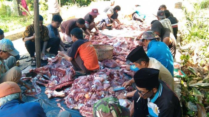 Warga Nagari Sitanang Berkurban 30 Sapi dan 29 Kambing, Wabup Lima Puluh Kota: Semarak Syiar Agama