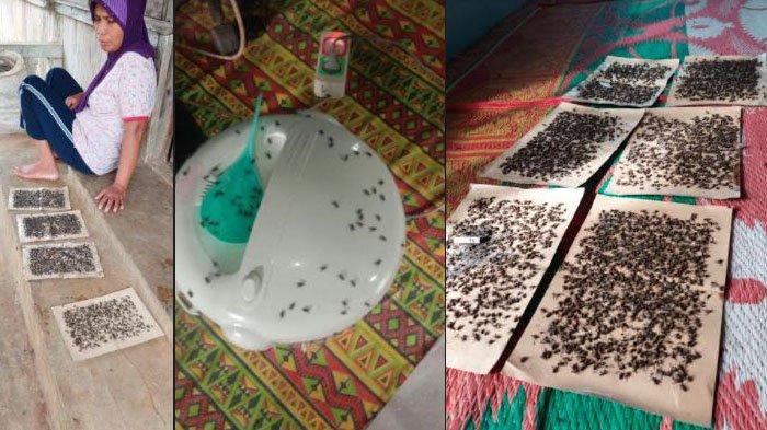 VIRAL Ribuan Lalat Serbu Rumah Warga Koto Tingga di Kab Solok: Kami Berebut Makanan dengan Lalat