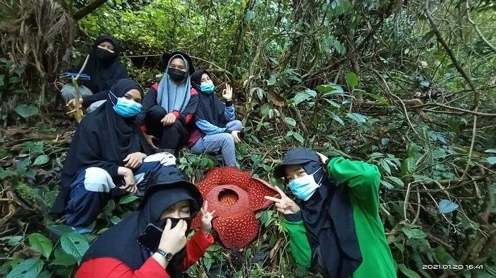 Pesona Rafflesia Tuan-Mudae Jantan, Mekar Sempurna di Cagar Alam Maninjau Kabupaten Agam