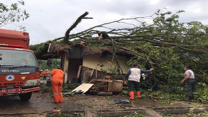 UPDATE Pohon Tumbang Diterjang Angin Kencang dan Hujan, Ada Menimpa Gedung Musala di Kota Padang