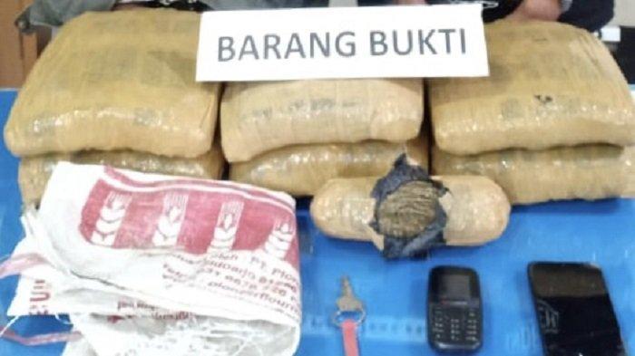 2 Lelaki Jemput 6,5 Kg Ganja ke Sumatera Utara, Rencana Edarkan di Tanah Datar Sumatera Barat