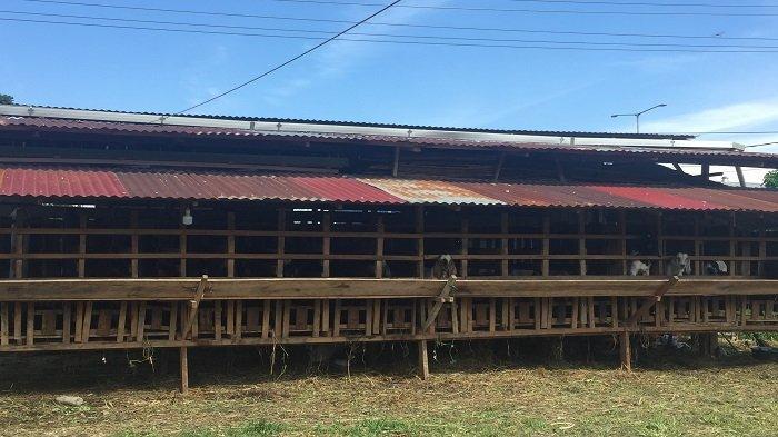 Jual Kambing Untuk Qurban di Bypass Kota Padang, Harga Mulai dari Rp 800 Ribu