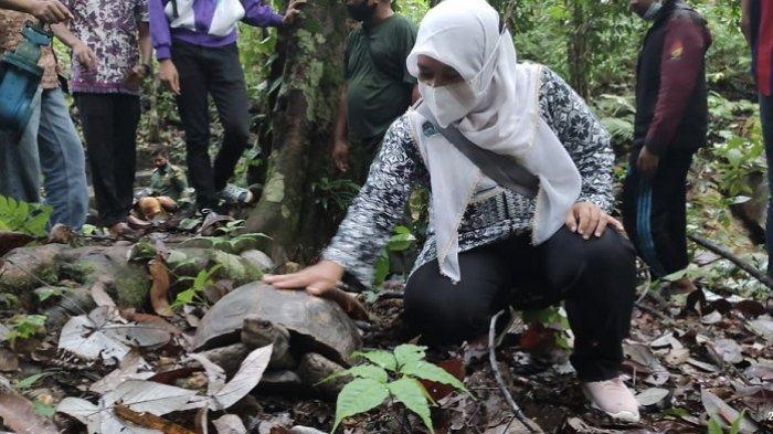 BKSDA Sumbar Lepas Liarkan 3 Ekor Kura-kura Kaki Gajah, 2 di Antaranya Diserahkan Mahasiswa UNP