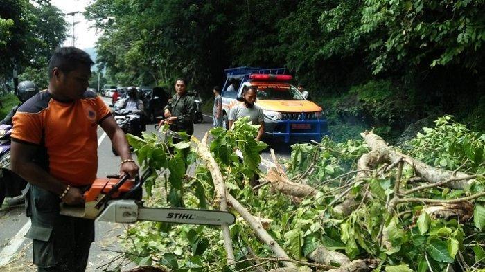 Pohon Tumbang di Bukit Lampu Padang, Akses Jalan Terhambat Selama 1 Jam