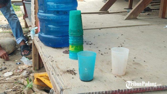 Penampakan kumpulan lalat yang ada di sekitar pemukiman warga di RT 03/RW 01, Kelurahan Pisang, Kecamatan Pauh, Kota Padang, Sumatera Barat, Sabtu (22/5/2021).