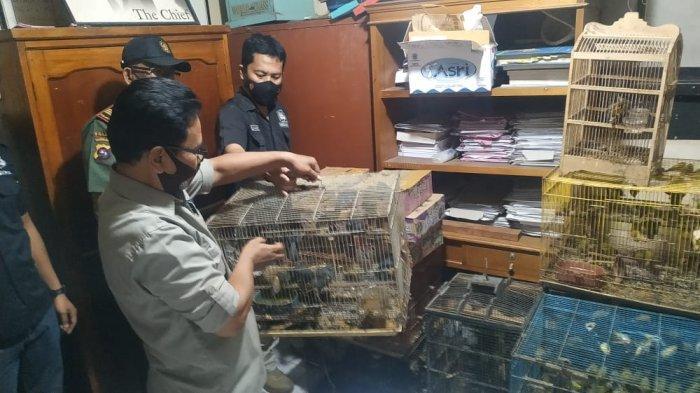 Nekat Bisnis Jual Beli Satwa Dilindungi, Seorang Pria di Agam Simpan Ratusan Burung di Rumah