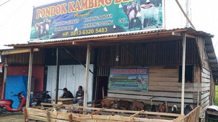 Dinas Pertanian Cek Kesehatan Hewan Kurban di Padang, Syahrial Kamat: Sudah Diperiksa Diberi Tanda