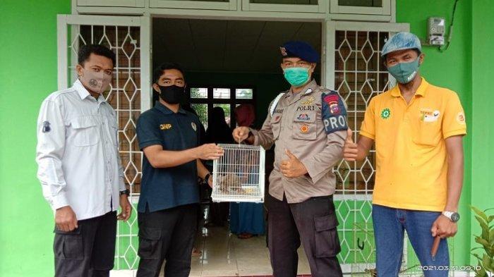 Anggota Brimob Polda Sumbar Temukan Kukang di Agam, Langsung Diserahkan ke BKSDA