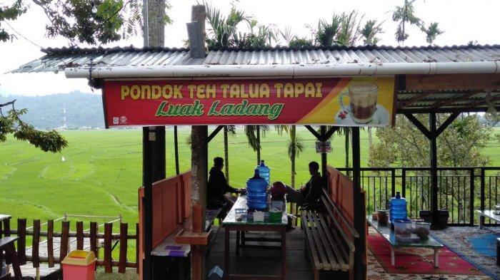Menikmati Teh Telur Sambil Memandang Hamparan Sawah, Panorama Rancak di Kamang Mudiak Kabupaten Agam
