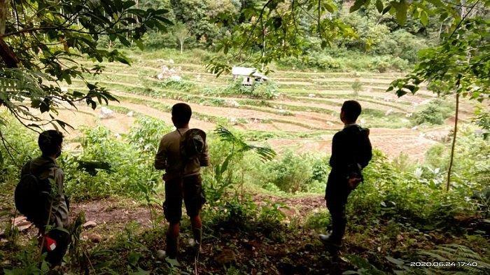 Serang Ternak Warga di Agam, BKSDA Sebut Satwa Liar Telah Kembali ke Kawasan Hutan Lindung