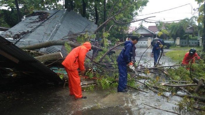 11 Pohon Tumbang Selama 3 Hari Terakhir Di Kota Bukittinggi