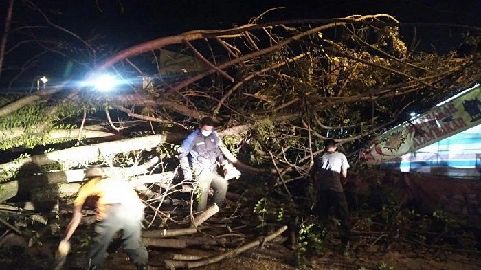 Petugas BPBD Kota Padang Evakuasi Pohon Tumbang yang Timpa Warung dan Menghambat Akses Jalan
