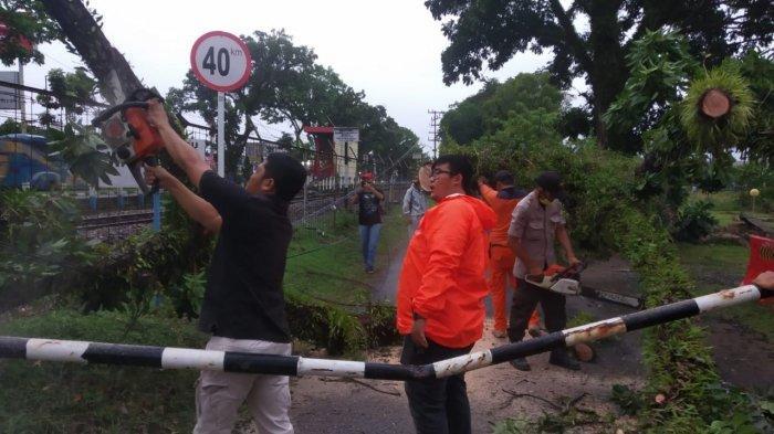 Hujan Badai Melanda Padang, 2 Pohon Tumbang Melintang di Jalan Halangi Pengendara