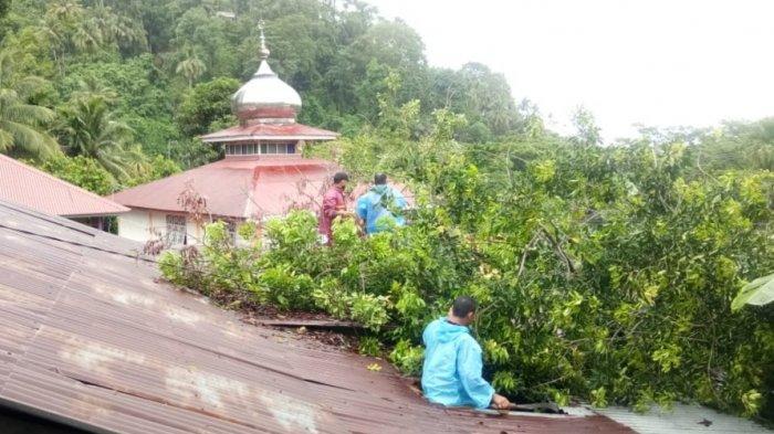 Hujan Guyur Kota Padang Sejak Pagi, 4 Pohon Tumbang Hambat Akses Jalan dan Timpa Rumah