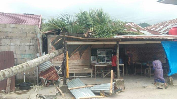 Pohon Pinang dan Pohon Kelapa Tumbang di Bungus Padang, Timpa Rumah Warga dan Kabel Listrik