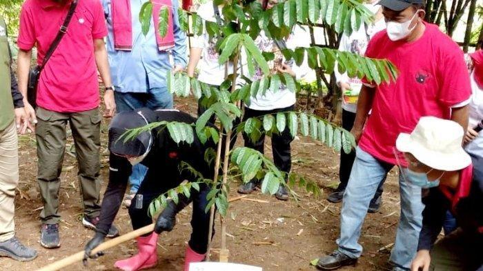Momentum HUT Ke-48 PDIP, Risma dan Komunitas Ciliwung Condet Tanam Pohon Salak dan Kecapi
