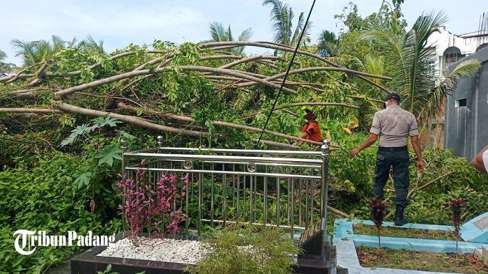 Pohon tumbang akibat hujan disertai angin kencang di Ulak Karang Selatan, Kota Padang, Sumatera Barat, Rabu (3/3/2021)
