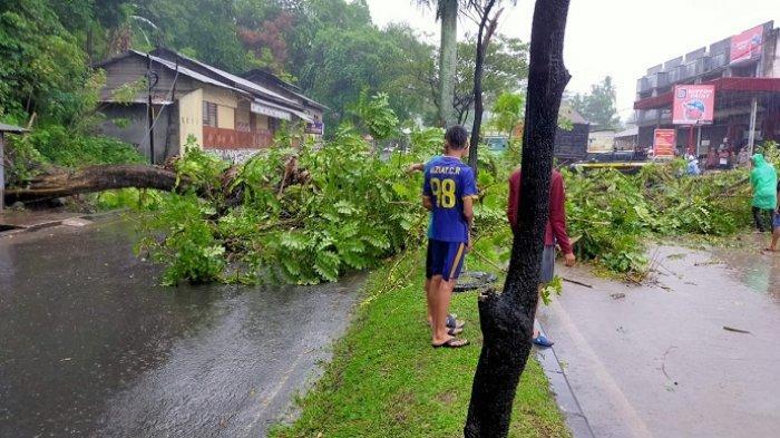 Pohon Tumbang Tutup Akses Padang-Solok di Padang Besi, Sempat Bikin Macet Total
