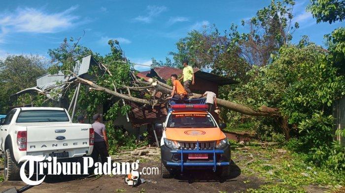 DLH Padang Butuh Tambahan Mobil Crane, Pemangkasan Dahan Pohon yang Lapuk