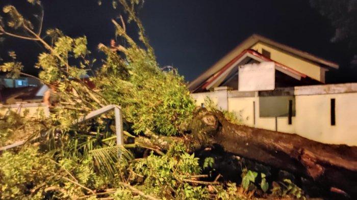 Pohon Tumbang di Padang Timpa Rumah Warga,BPBD Sebut Ada 6 Pohon Tumbang Saat Hujan Lebat Kemarin