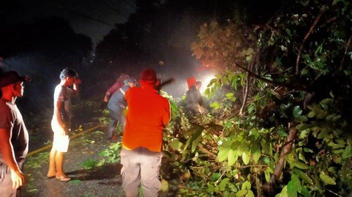 Hujan Disertai Angin Kencang, 2 Pohon Tumbang Hambat Akses Jalan di Padang