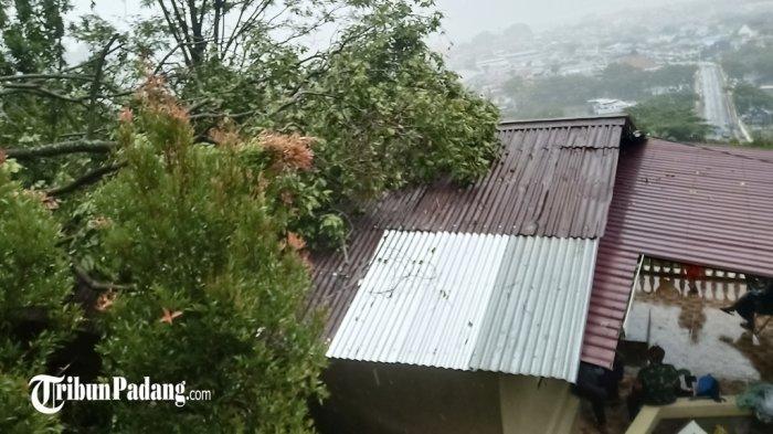 16 Pohon Tumbang Akibat Hujan Disertai Angin Kencang di Padang, BPBD: Timpa Rumah dan Pengendara