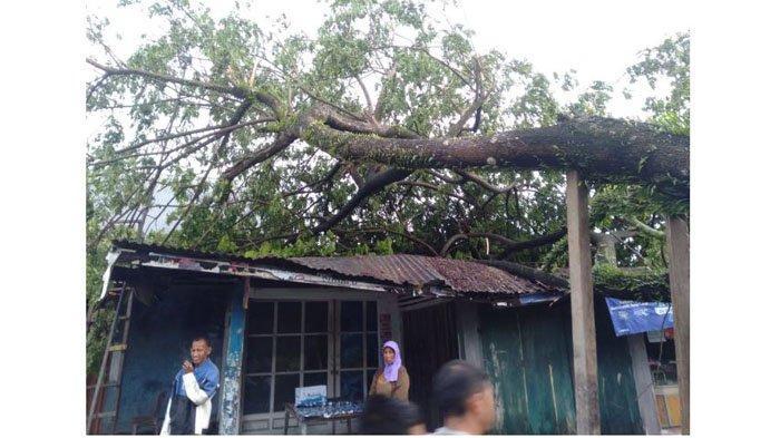 21 Pohon Tumbang Saat Padang Diguyur Hujan Diserta Angin Kencang, Timpa Rumah hingga Musalla