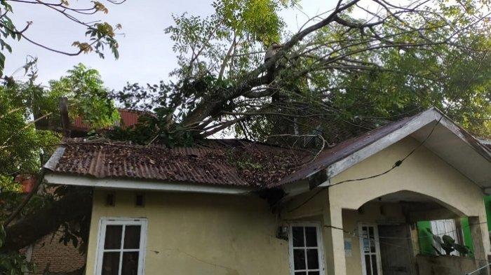Pohon Tumbang Timpa Rumah Warga Padang, Dahannya Menembus Atap, Satu Orang Terluka
