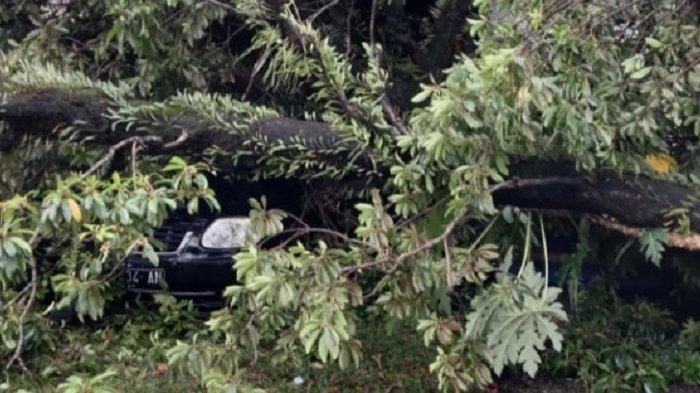 19 Pohon Tumbang Akibat Angin Kencang di Padang, Timpa Kantor Lurah hingga Mobil