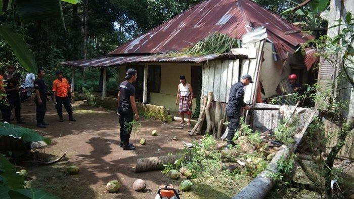 Pohon Tumbang di Padang Pariaman Timpa Rumah Warga, BPBD Sebut Kerugian Sekitar Rp15 Juta