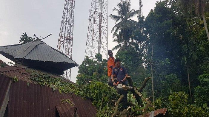 Diterjang Angin Kencang, Pohon Tumbang saat Warga Padang Selatan Bergotong-royong