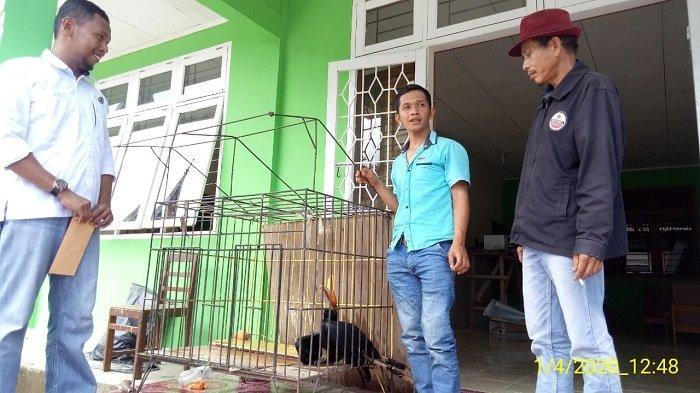 POPULER SUMBAR - Warga Agam Temukan Burung Rangkong Badak| 7 Pelaku Kriminal Diamankan