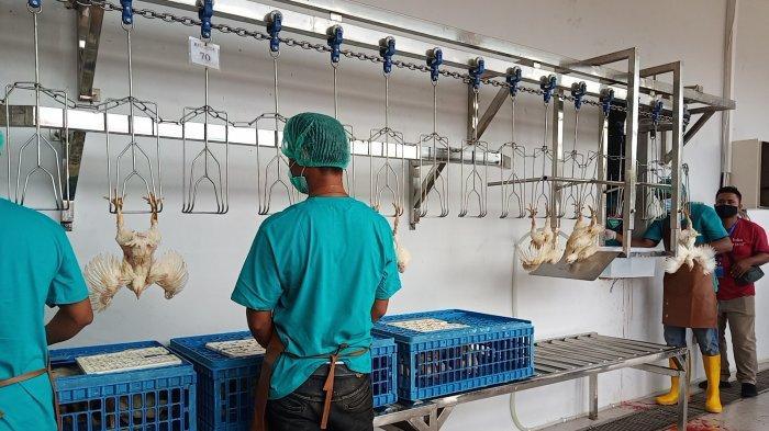 Padang Kini Punya Rumah Potong Unggas Kapasitas 1500 Ekor per Jam, Pertama di Sumatera Tengah