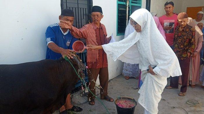 Sebelum Disembelih, Sapi Kurban di Padang Ini Dimandikan Pakai Air Bunga 7 Rupa, lalu Didandani