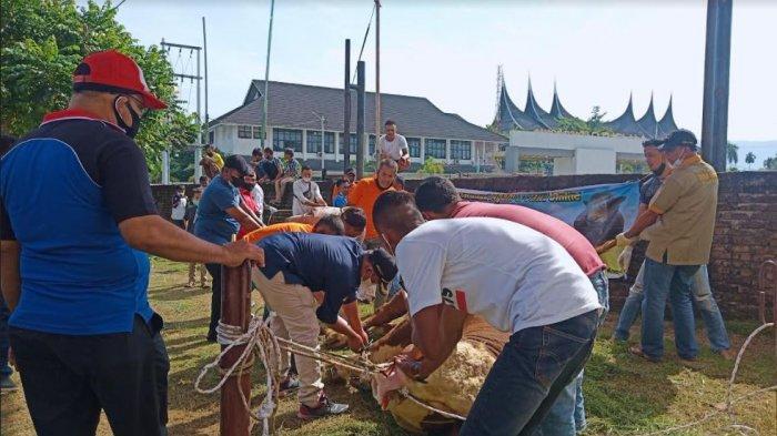 Pemprov Sumbar Siapkan 800 Kantong Daging dari Sapi Kurban Presiden Jokowi, Diantar ke Rumah Warga
