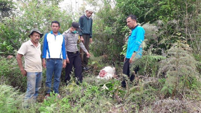 Kambing WargaDitemukan Mati dengan Luka di Leher,BKSDA Pasang 3 Kamera Trap Pantau Satwa Liar
