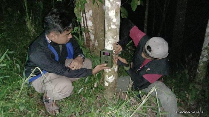 BKSDA Resor Agam Pasang Kamera, Intai Binatang yang Menerkam Kambing Milik Warga