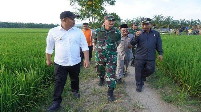 Danrem 032/Wirabraja Motivasi Petani di Dharmasraya Jadi Pelopor, Tingkatkan Ketahanan Pangan