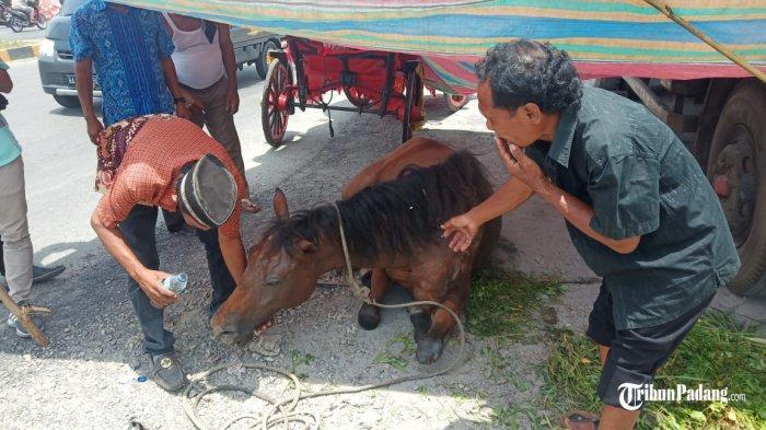 POPULER PADANG - Cuaca Panas, Kuda Bendi Mendadak Tergeletak  Penemuan Mayat Bayi di Pauh