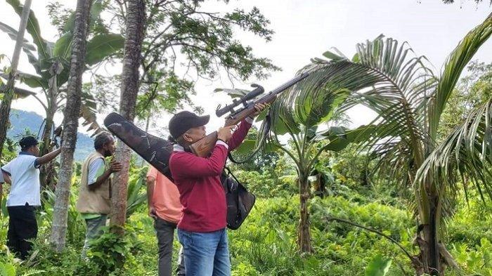 Dinas Pertanian Padang Kerahkan 15 Pemburu di 2 Kelurahan, Tembak Hama Tupai hingga Kera